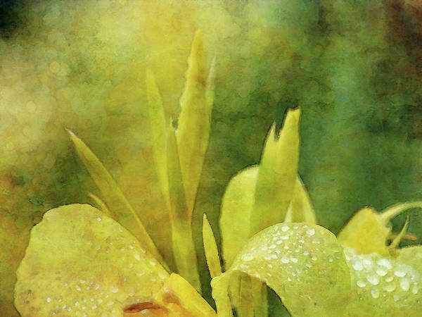 Photograph - Yellow Cream And Dew 5192 Idp_2 by Steven Ward