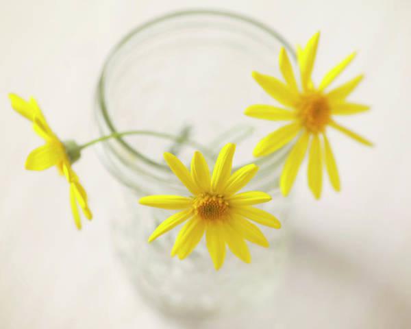 Jar Photograph - Yellow Daisies In Glass Jar by Sharon Lapkin