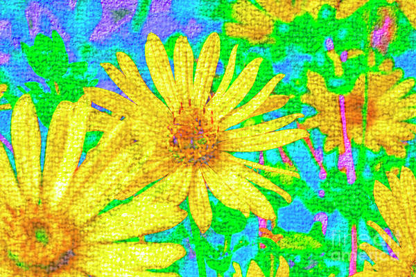 Photograph - Yellow Daisies by Nigel Dudson