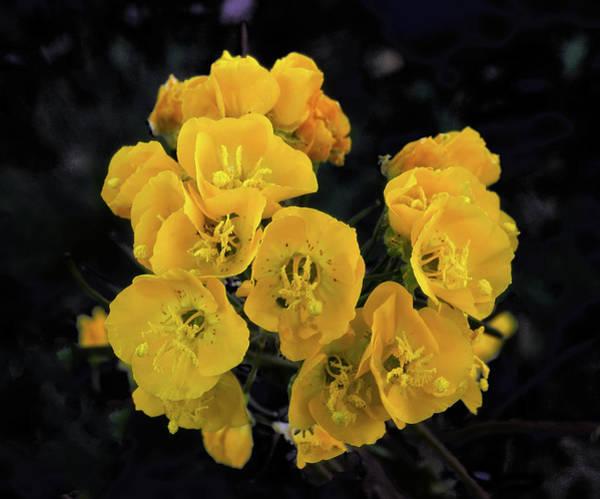 Photograph - Yellow Desert Bouquet by Paul Breitkreuz