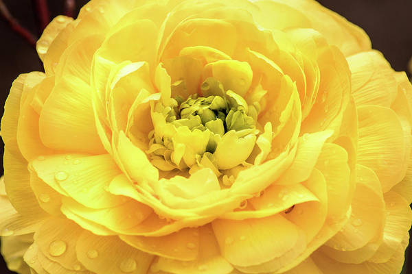 Photograph - Yellow by Don Johnson
