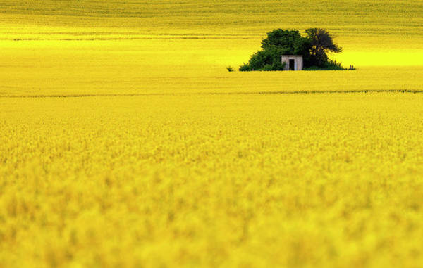 Photograph - Yellow by Evgeni Dinev