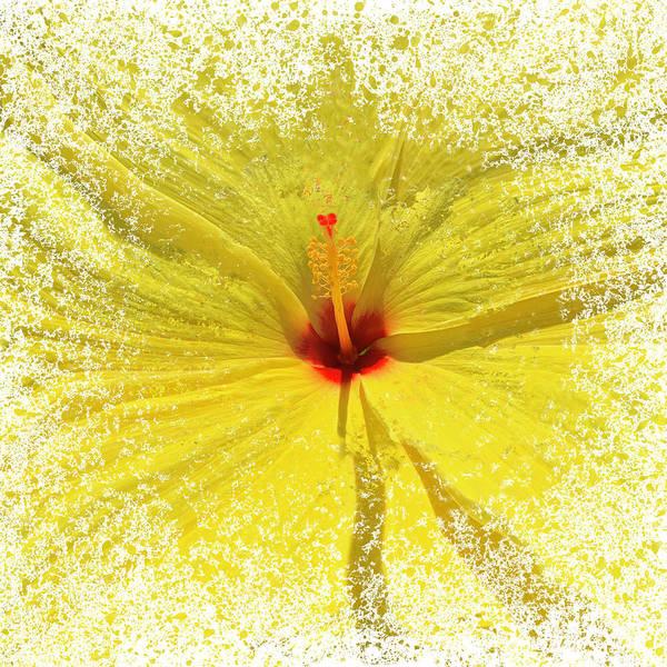 Yellow Explosion Art Print