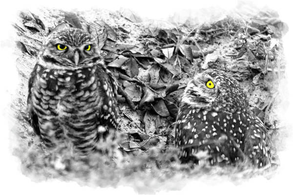 Photograph - Yellow Eyes by Dan Friend