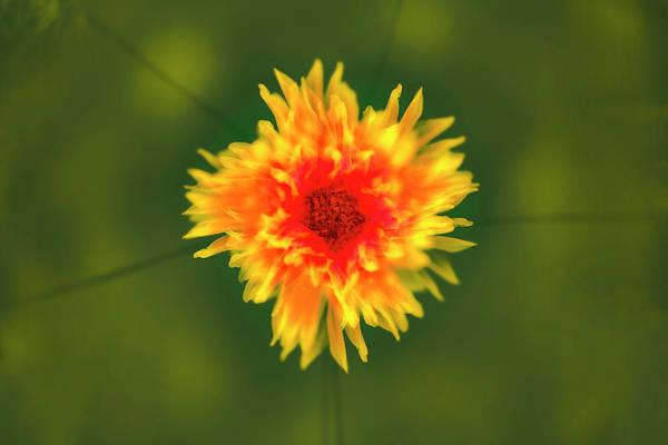 Wall Art - Photograph - Yellow Flower by Adam Jones