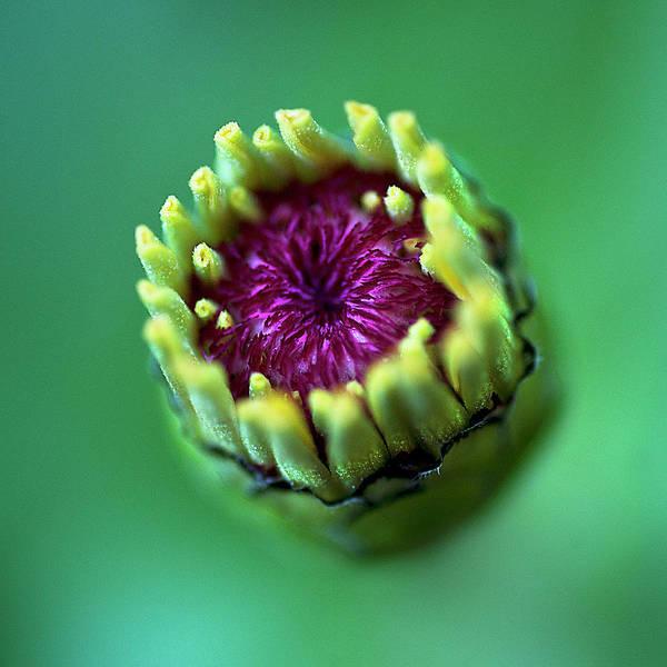 Wall Art - Photograph - Yellow Flower Bud by Carlos. E. Serrano