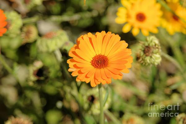 Wall Art - Photograph - Yellow Flower by Jeff Swan