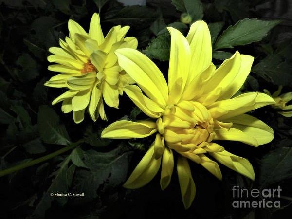 Photograph - Yellow Flower No. 87 by Monica C Stovall
