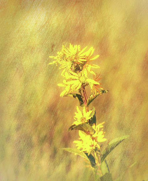 Photograph - Yellow Flowers by Dan Sproul