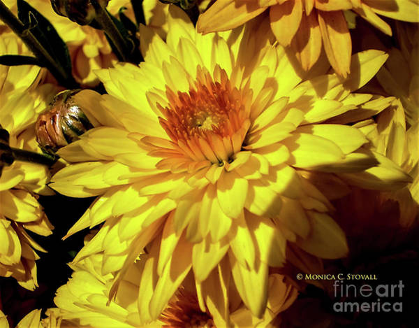 Photograph - Yellow Flowers Y28 by Monica C Stovall