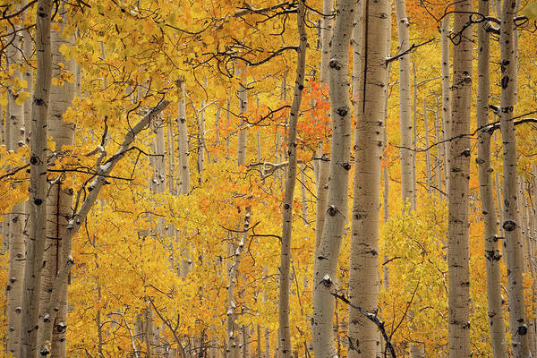 Photograph - Yellow Forest by Leland D Howard