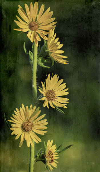Photograph - Yellow Grunge Flowers Vertical by Dan Sproul