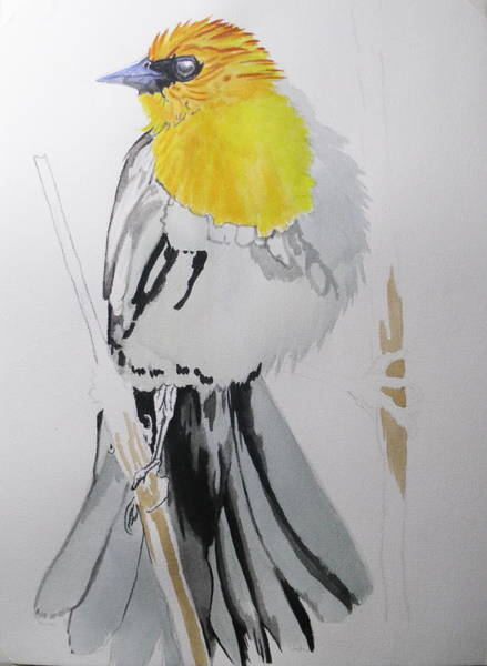 Painting - Yellow-headed Black Bird 1 by Barbara Keith