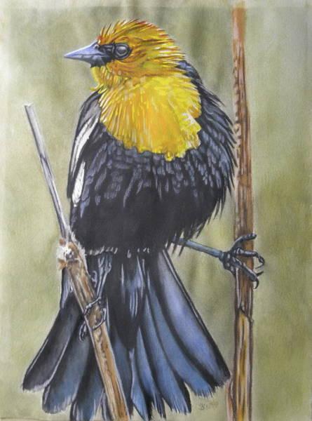 Painting - Yellow-headed Black Bird 7 by Barbara Keith