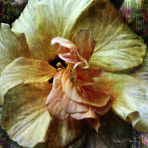 Digital Art - Yellow Hibiscus by Barbara Berney