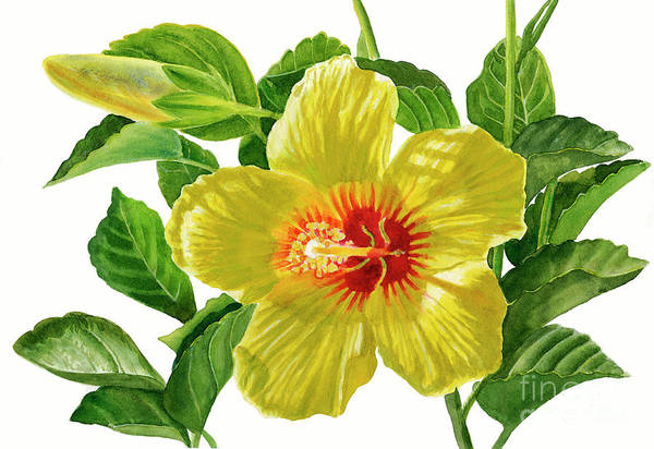Wall Art - Painting - Yellow Hibiscus Blossom With Bud by Sharon Freeman