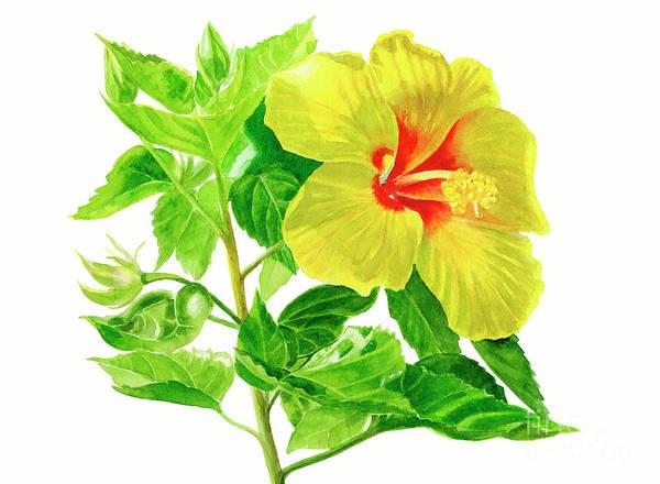 Hibiscus Flower Painting - Yellow Hibiscus Flower by Sharon Freeman