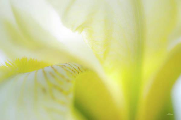 Photograph - Yellow Iris 5 by Leland D Howard