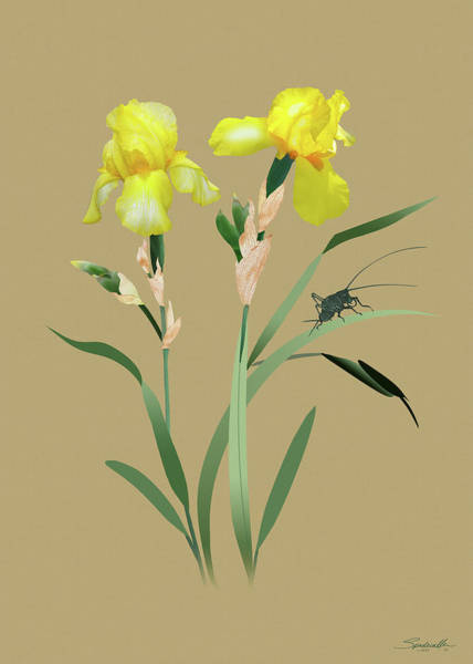 Wall Art - Digital Art - Yellow Iris And Cricket by M Spadecaller