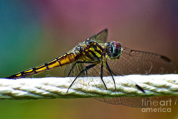 Photograph - Dragonfly by Lita Kelley