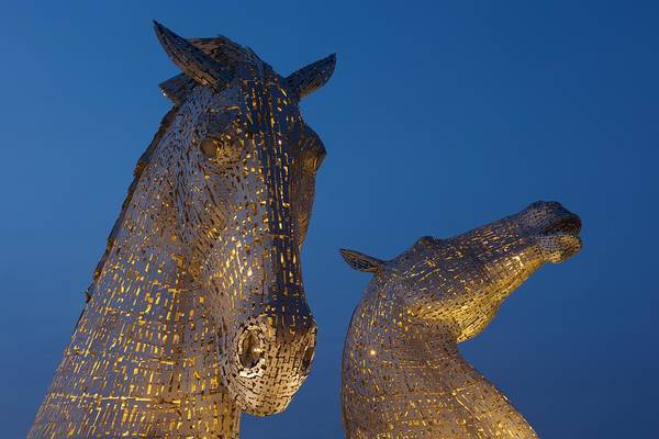Photograph - Yellow Kelpies by Stephen Taylor