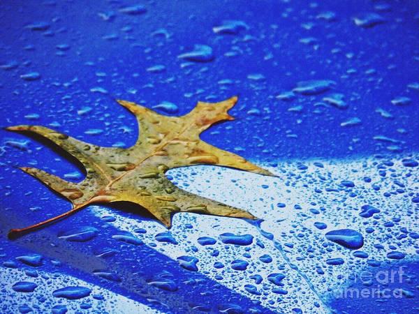 Wall Art - Photograph - Yellow Leaf On A Blue Car  by Sarah Loft