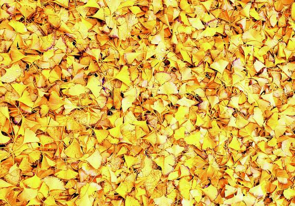 Wall Art - Photograph - Yellow Leaf Raindrops by Stephen Nett
