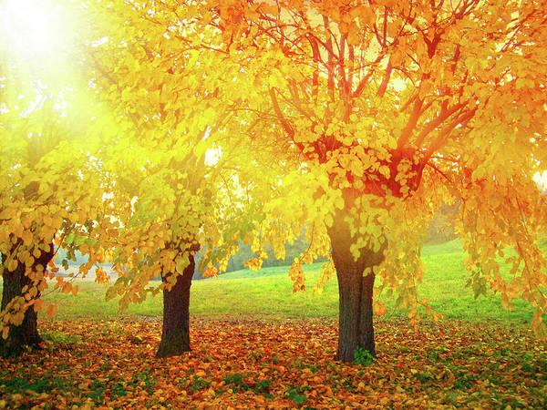 Friuli Photograph - Yellow Leaves by Dima Lauzzana