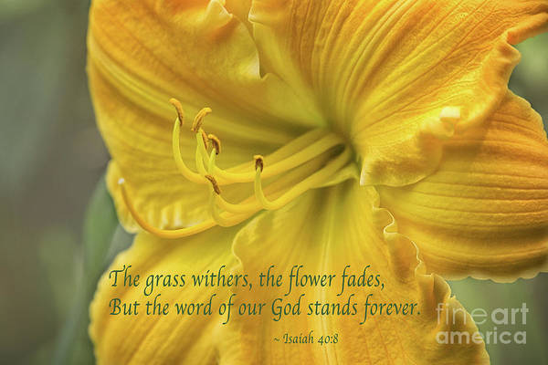 Wall Art - Photograph - Yellow Lily Isaiah 40 by Sharon McConnell