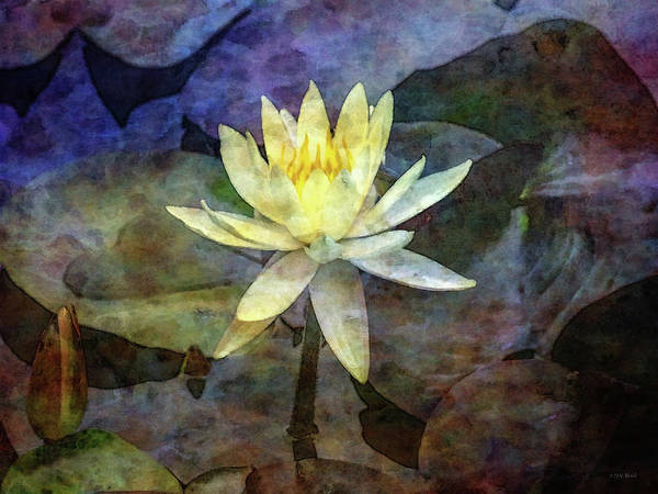 Photograph - Yellow Lotus 4136 Idp_2 by Steven Ward