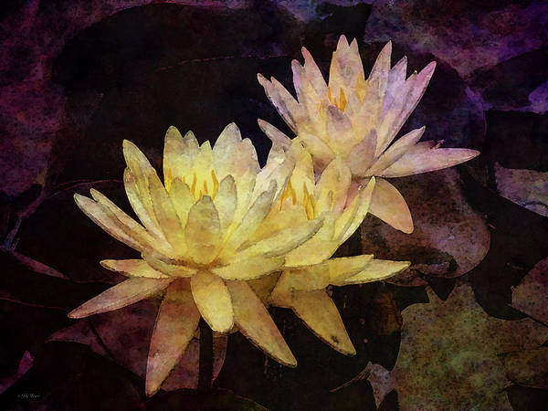 Photograph - Yellow Lotus Blossoms 4135 Idp_2 by Steven Ward