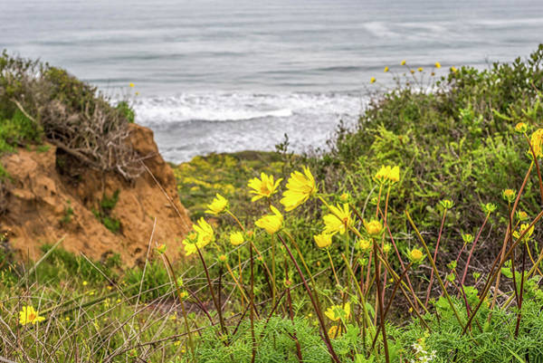 Wall Art - Photograph - Yellow Lovlies Above The Sea by Joseph S Giacalone