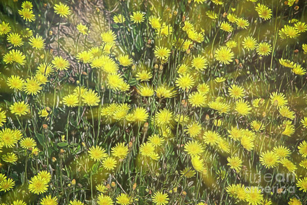 Wall Art - Digital Art - Yellow Meadow by Veikko Suikkanen