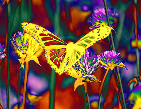 Photograph - Yellow Monarch Butterfly by Tom Kelly