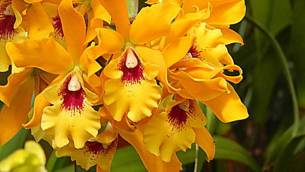 Wall Art - Photograph - Yellow Orchids by Arlane Crump