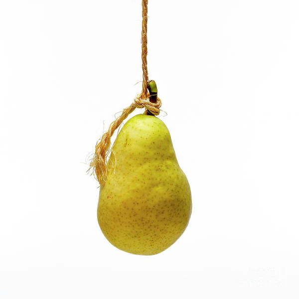 Wall Art - Photograph - Yellow Pear On A White Background by Bernard Jaubert