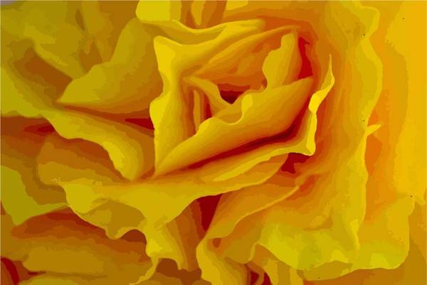 Photograph - Yellow Petals by Susan Rydberg