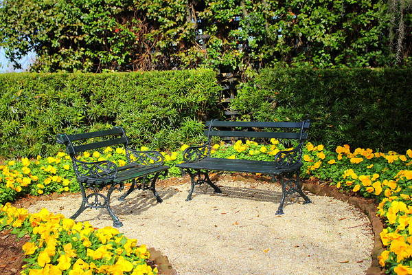 Photograph - Yellow Poppy Garden by Cynthia Guinn