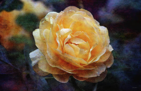 Photograph - Yellow Rose 0366 Idp_yr_3 by Steven Ward