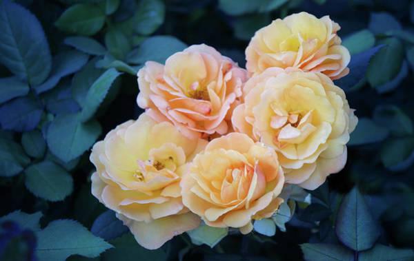 Wall Art - Photograph - Yellow Rose Flowers by Art Spectrum