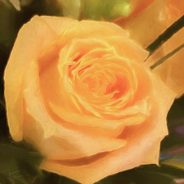 Photograph - Yellow Rose For Peace By Teresa Wilson by Teresa Wilson