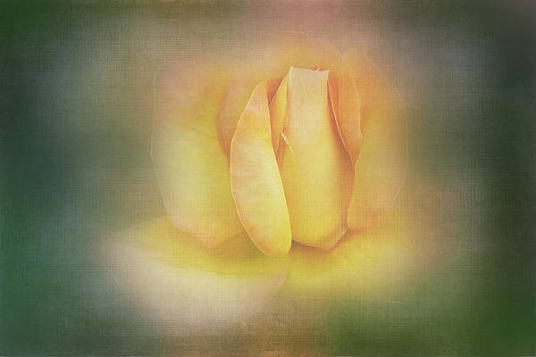 Wall Art - Digital Art - Yellow Rose On Linen by Terry Davis
