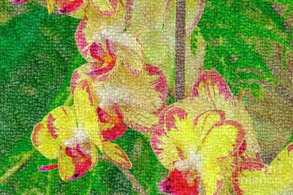Yellow/rouge Orchids Art Print