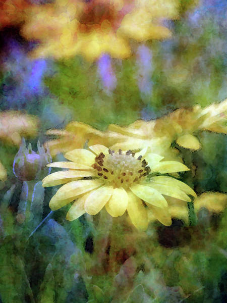 Photograph - Yellow Soul 6425 Idp_2 by Steven Ward