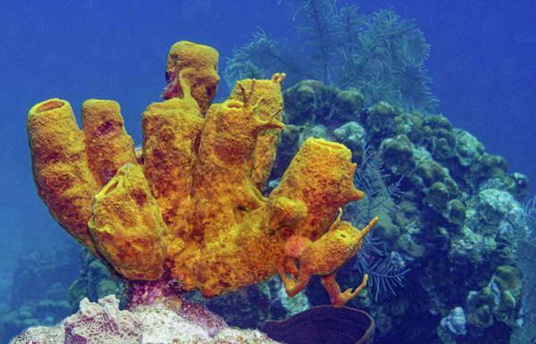 Photograph - Yellow Sponge Scenic by Jean Noren
