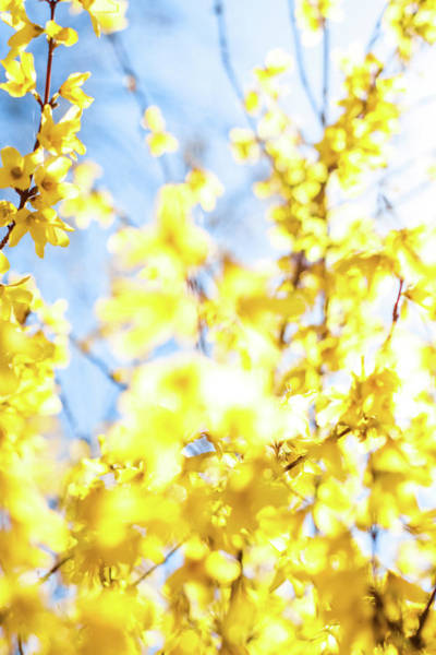 Photograph - Yellow Spring IIi by Anne Leven