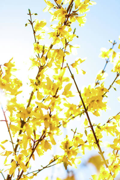 Photograph - Yellow Spring Iv by Anne Leven