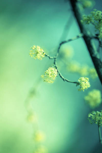 Wall Art - Photograph - Yellow Spring by Jeja