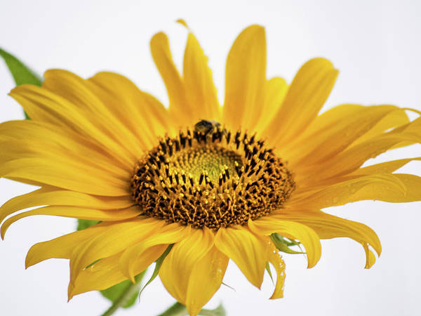 Photograph - Yellow by Stewart Helberg