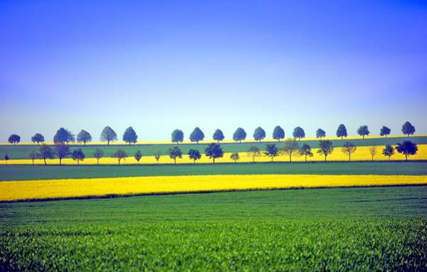 Horizontal Stripes Photograph - Yellow Striped Fields by Created By Tobi2008